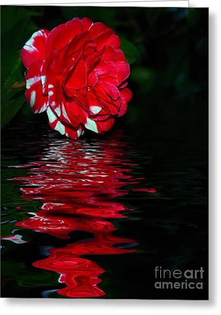 Reflection On Pond Greeting Cards - Evening Camellia Reflections by Kaye Menner Greeting Card by Kaye Menner