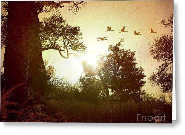 Enhanced Greeting Cards - Evening Flying Geese Greeting Card by Bedros Awak