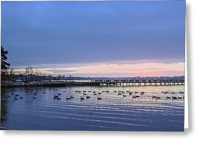 Fishing Creek Greeting Cards - Evening Geese - Pano Greeting Card by Brian Wallace