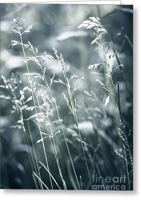 Fresh Green Greeting Cards - Evening grass flowering Greeting Card by Elena Elisseeva