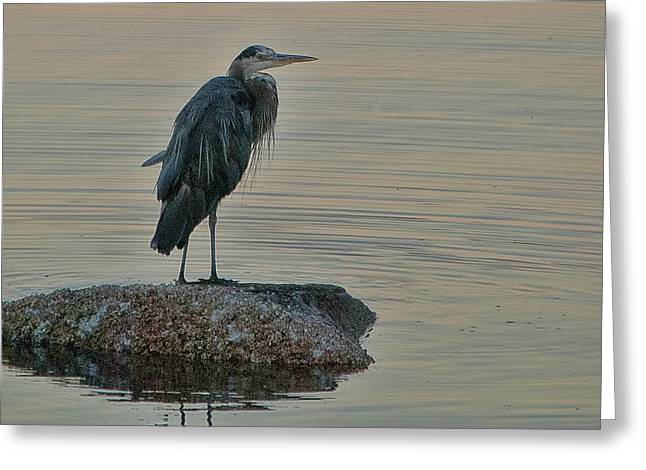 Penn Cove Greeting Cards Greeting Cards - Evening Hunt Greeting Card by Ron Roberts