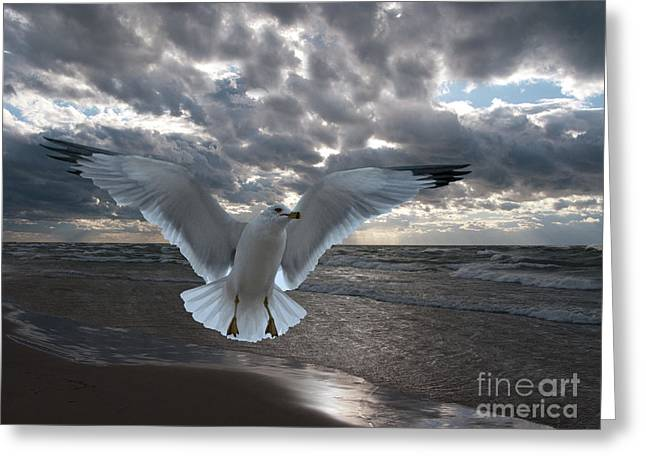Sea Animals Greeting Cards - Evening Landing Greeting Card by Ann Horn