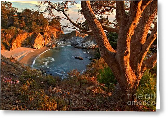 Big Sir California Greeting Cards - Evening Light At Pfeiffer Burns Greeting Card by Adam Jewell