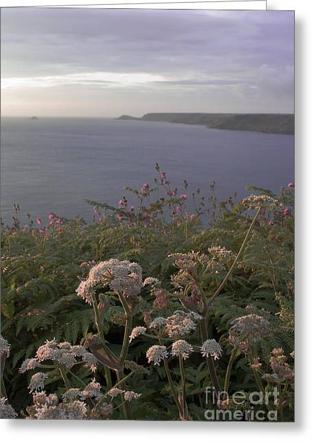 Cape Cornwall Greeting Cards - Evening Light in Cornwall Greeting Card by Terri  Waters