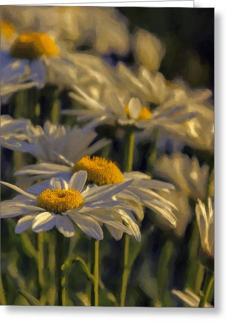 Close Focus Nature Scene Greeting Cards - Evening Light Greeting Card by Jean OKeeffe Macro Abundance Art