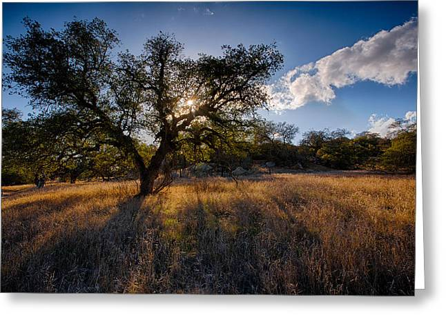 Big Sky Greeting Cards - Evening Light Greeting Card by Peter Tellone