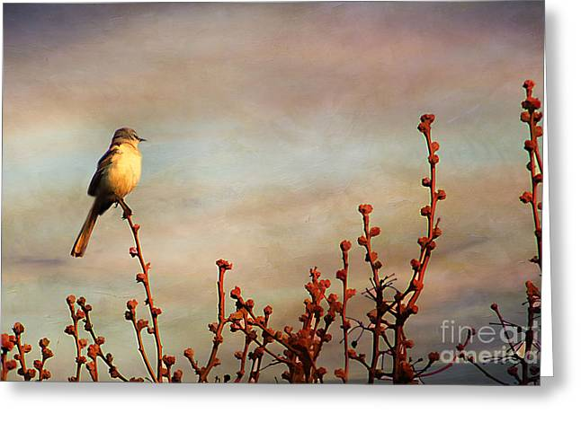 Evening Mocking Bird Greeting Card by Darren Fisher