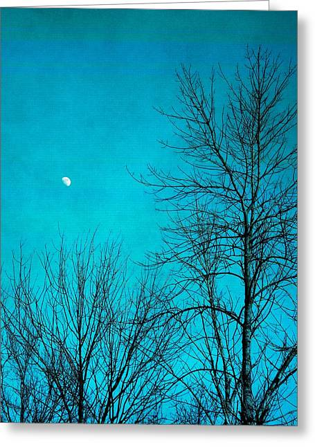 Forest At Night Greeting Cards - Evening Moon Greeting Card by Dan Sproul
