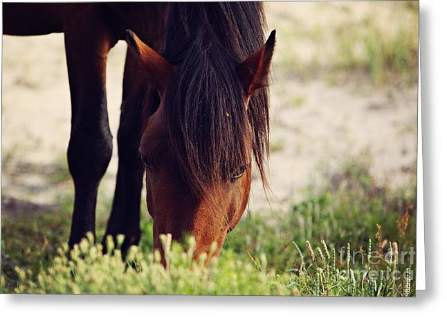 Horse Pyrography Greeting Cards - Evening Munch Greeting Card by Lyndsey Warren