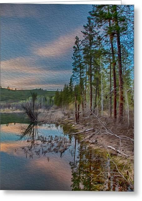 Owfotografik Greeting Cards - Evening on the Banks of a Beaver Pond Greeting Card by Omaste Witkowski
