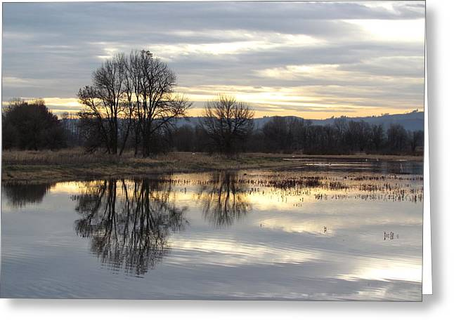 Wildlife Refuge. Greeting Cards - Evening on the Refuge Greeting Card by Angie Vogel