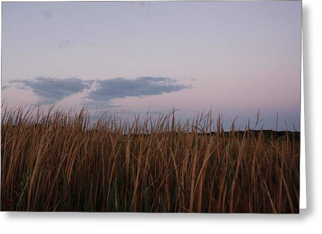 Evening Rushes Greeting Card by Amanda Holmes Tzafrir