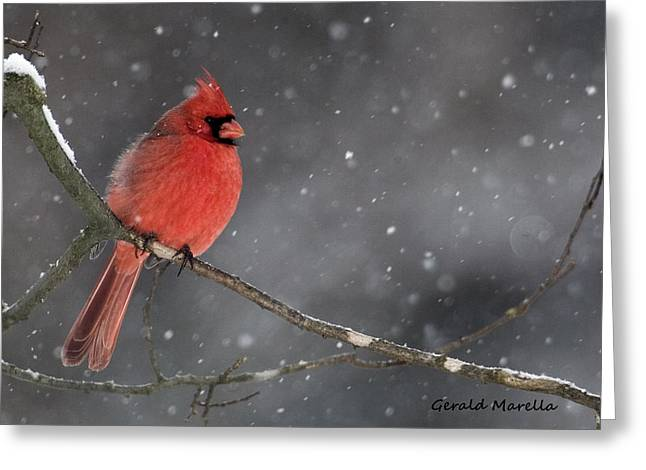 Male Cardinals In Snow Greeting Cards - Evening Snow Greeting Card by Gerald Marella