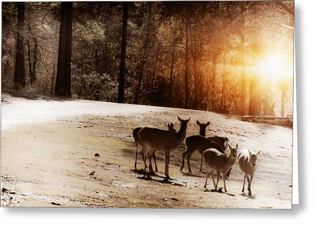 Evening Social  Greeting Card by Kim Henderson
