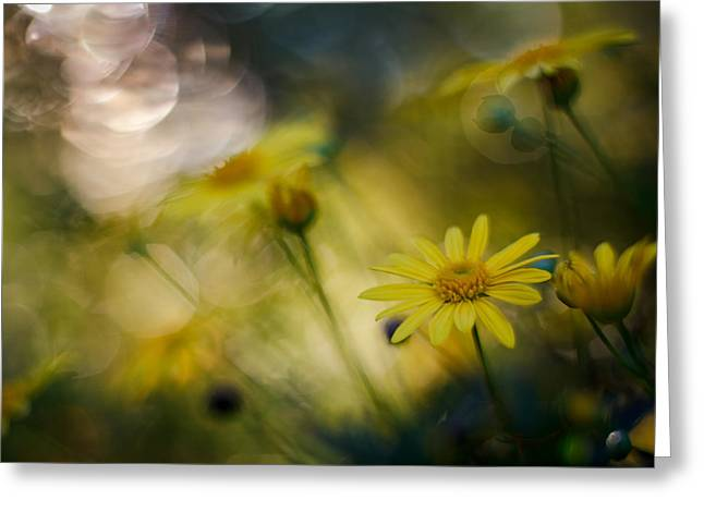 Evening Lights Greeting Cards - Evening Sun Bokeh Greeting Card by Constance Fein Harding