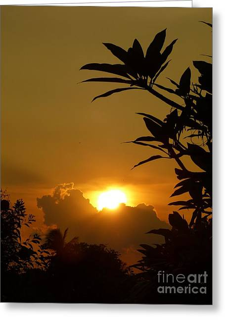 Against The Sunlight Greeting Cards - Evening Sun Greeting Card by Marguerita Tan