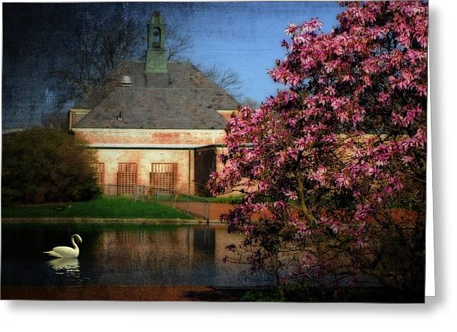Tulip Tree Digital Art Greeting Cards - Evening Swan Greeting Card by Mary Timman