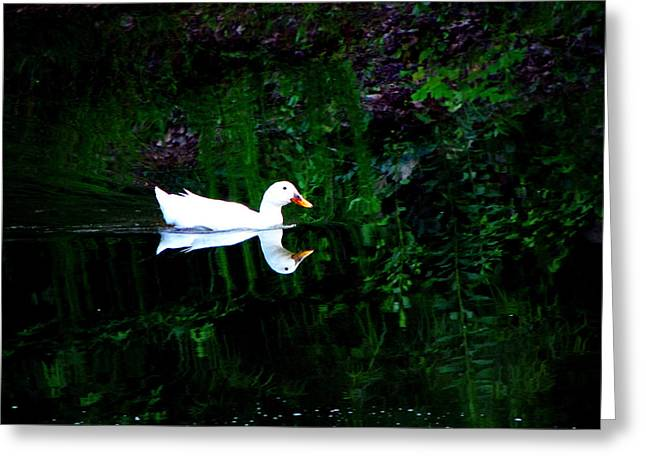 Greg Simmons Greeting Cards - Evening Swim Greeting Card by Greg Simmons