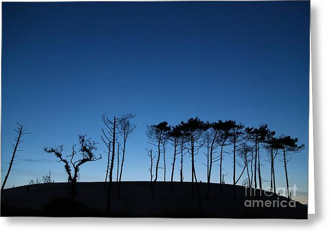 """south West France"" Greeting Cards - Evening tree blues Greeting Card by Csilla Szabo"