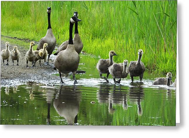 Cackle Greeting Cards - Evening Walk Greeting Card by Francie Davis