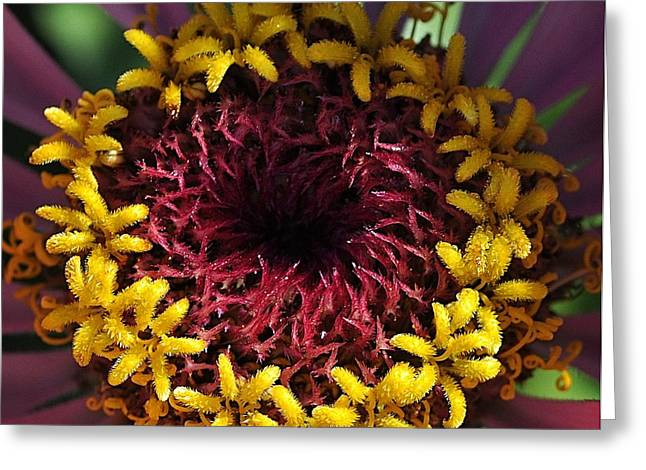 Zinnia Elegans Greeting Cards - Event Horizon Greeting Card by Chris Fleming