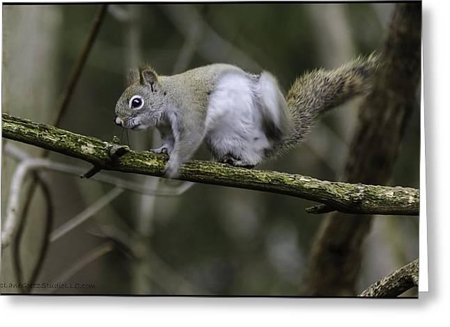 Squirrel Greeting Cards - Ever get the Itch Greeting Card by LeeAnn McLaneGoetz McLaneGoetzStudioLLCcom