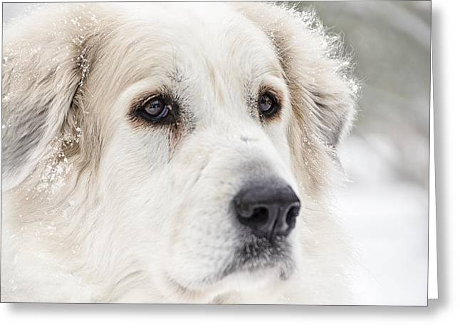Recently Sold -  - Guard Dog Greeting Cards - Ever Watchful Greeting Card by Kate Houlne