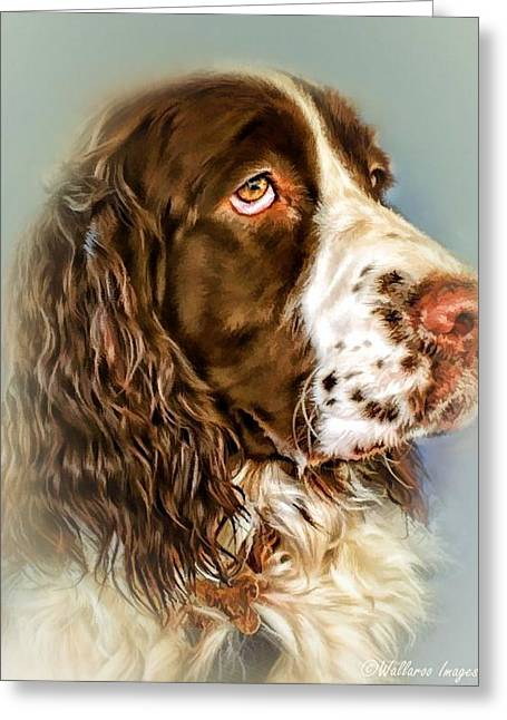 Spaniel Greeting Cards - Ever Watchful English Springer Spaniel Greeting Card by Wallaroo Images