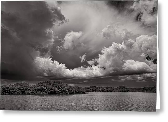 Mangrove Forest Greeting Cards - Everglades 0257BW Greeting Card by Rudy Umans