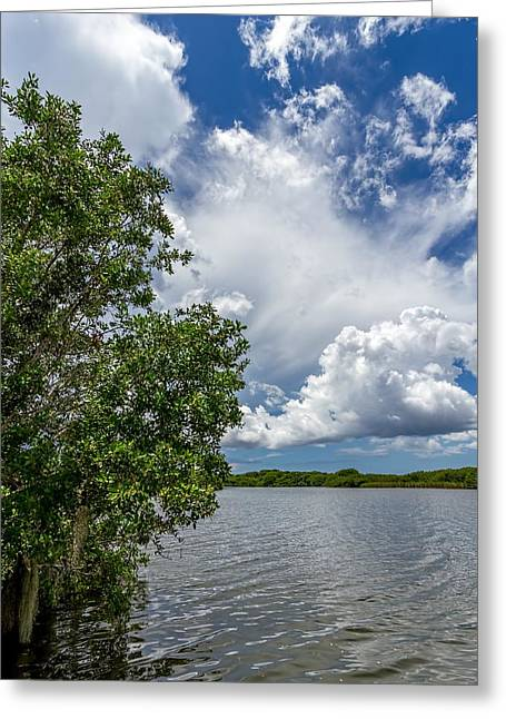 Mangrove Forest Greeting Cards - Everglades 0266 Greeting Card by Rudy Umans