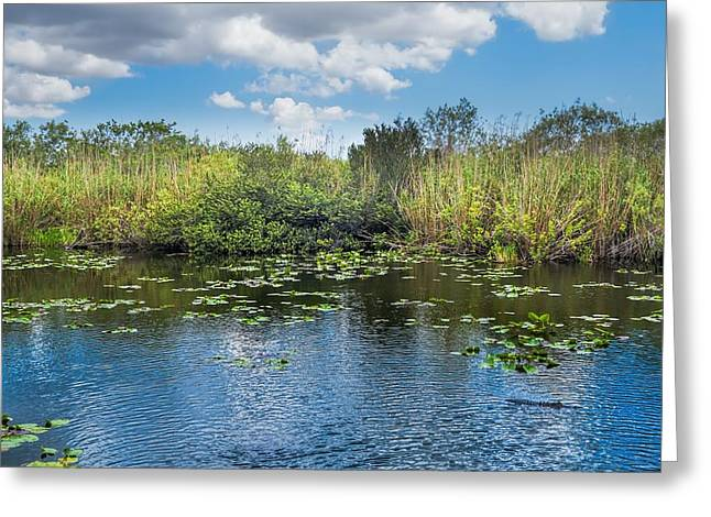 Mangrove Forest Greeting Cards - Everglades 0817 Greeting Card by Rudy Umans