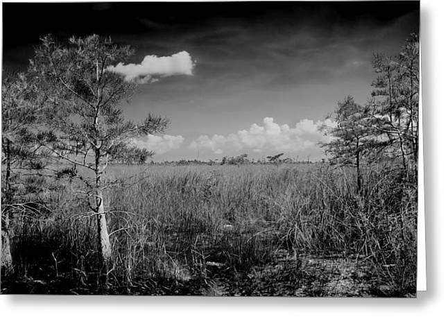 Everglades 1909bw Greeting Card by Rudy Umans