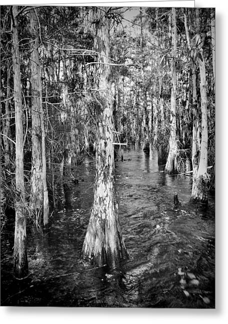 Mystical Landscape Greeting Cards - Everglades 5200BW Greeting Card by Rudy Umans