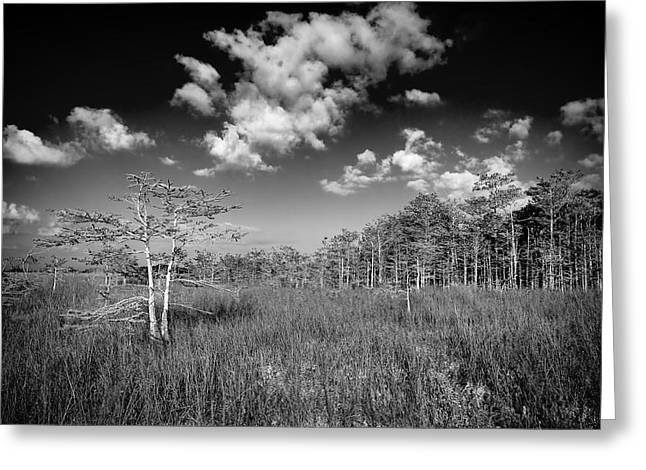 Sloughs Greeting Cards - Everglades 9574BW Greeting Card by Rudy Umans
