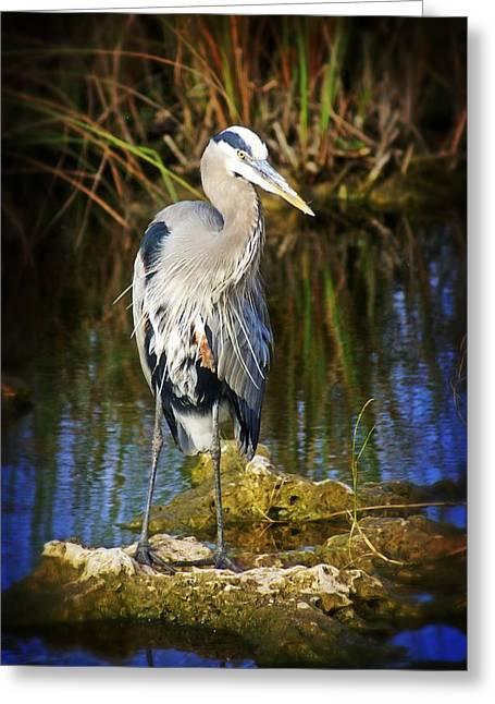 Everglades Blue Greeting Card by Marty Koch