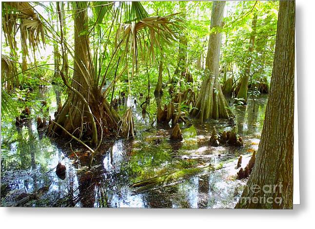 Trappers Greeting Cards - Everglades Greeting Card by Carey Chen