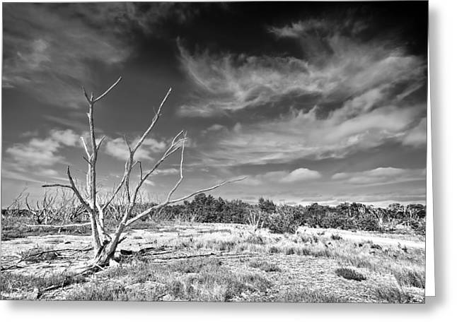 Blue Mudstone Greeting Card featuring the photograph Everglades Coastal Prairies Bw by Rudy Umans