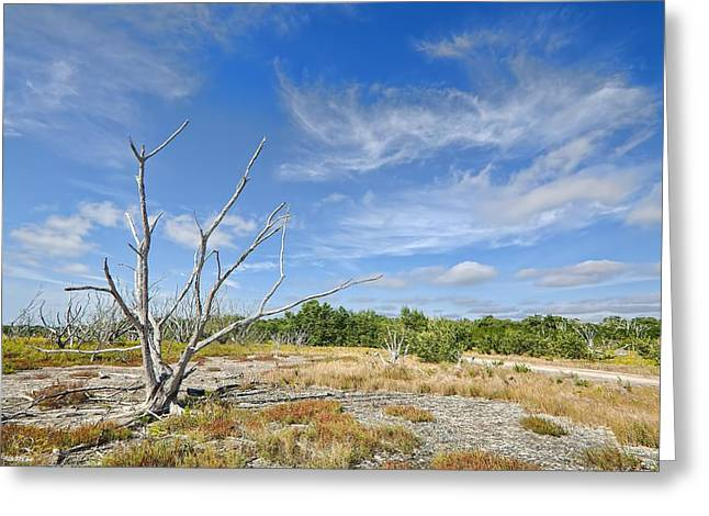 Blue Mudstone Greeting Card featuring the photograph Everglades Coastal Prairies by Rudy Umans