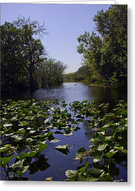 Watershed Greeting Cards - Everglades in Perspective - Florida Greeting Card by Madeline Ellis