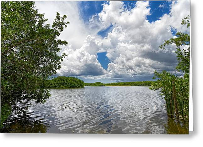 Mangrove Forest Greeting Cards - Everglades Lake - 0278 Greeting Card by Rudy Umans