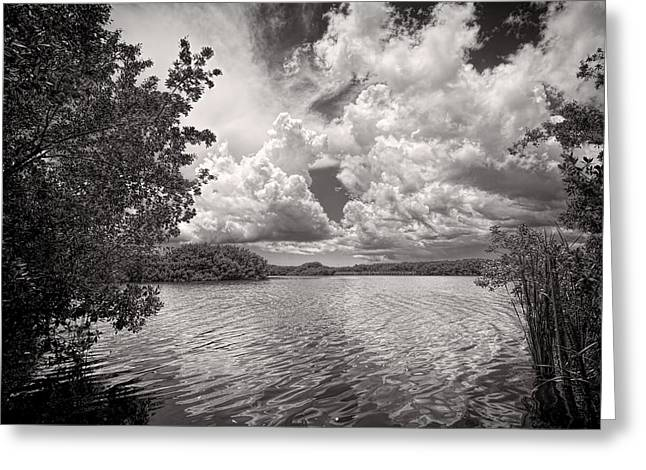 Mangrove Forest Greeting Cards - Everglades lake - 0278BW Greeting Card by Rudy Umans