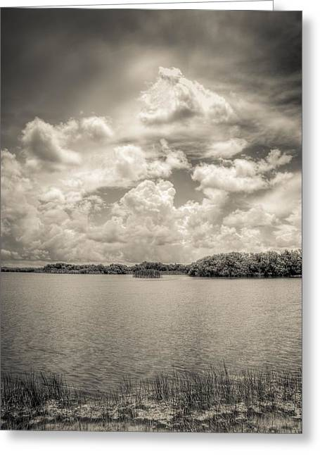 Mangrove Forest Greeting Cards - Everglades lake 6919 BW Greeting Card by Rudy Umans