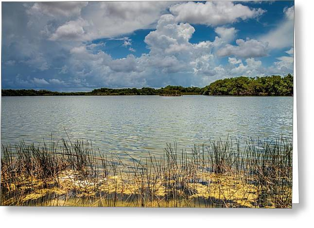 Mangrove Forest Greeting Cards - Everglades lake 6930 Greeting Card by Rudy Umans