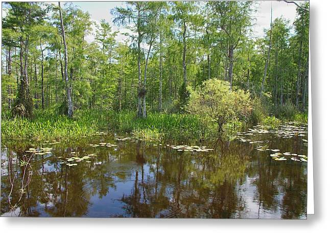 Mangrove Forest Greeting Cards - Everglades Lake Greeting Card by Rudy Umans