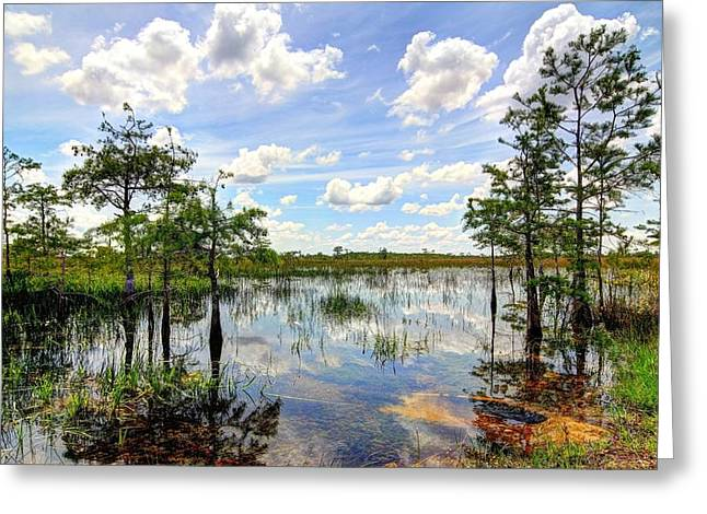 Deep Blue River Greeting Cards - Everglades Landscape 8 Greeting Card by Rudy Umans
