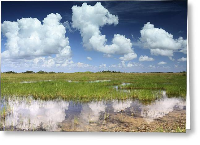 Reflections In River Greeting Cards - Everglades Landscape with clouds reflection Greeting Card by Rudy Umans