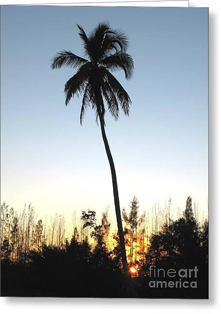 Eve Wheeler Greeting Cards - Everglades Palm V-2 Greeting Card by Eve Wheeler