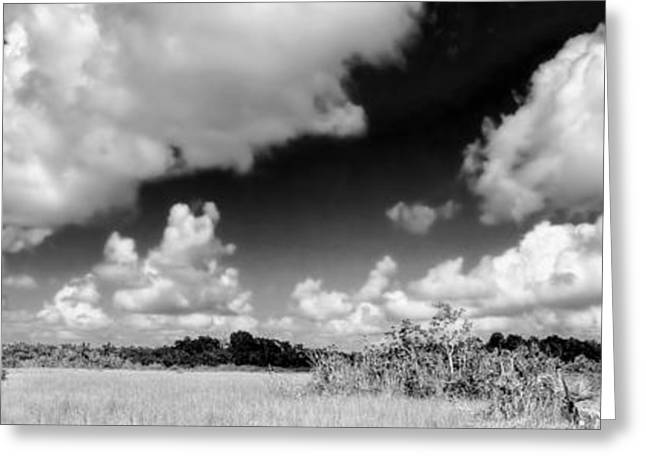 Mystical Landscape Greeting Cards - Everglades Panorama Greeting Card by Rudy Umans