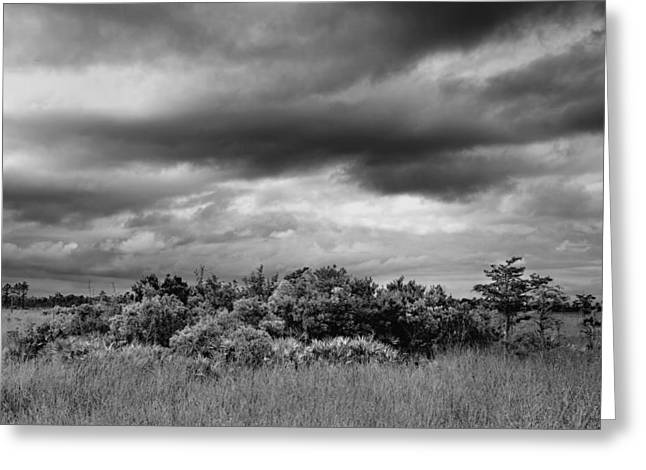 Everglades Storm Bw Greeting Card by Rudy Umans