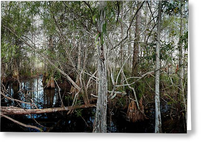 Mystical Landscape Greeting Cards - Everglades Swamp-1 Greeting Card by Rudy Umans